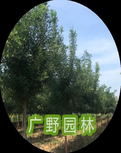 河北綠化方案 專業綠化設計價格相關