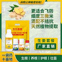 生姜叶子发黄用什么药有效_真菌感染用什么药相关-郑州高收农业科技有限公司